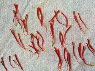 Saffron stamens