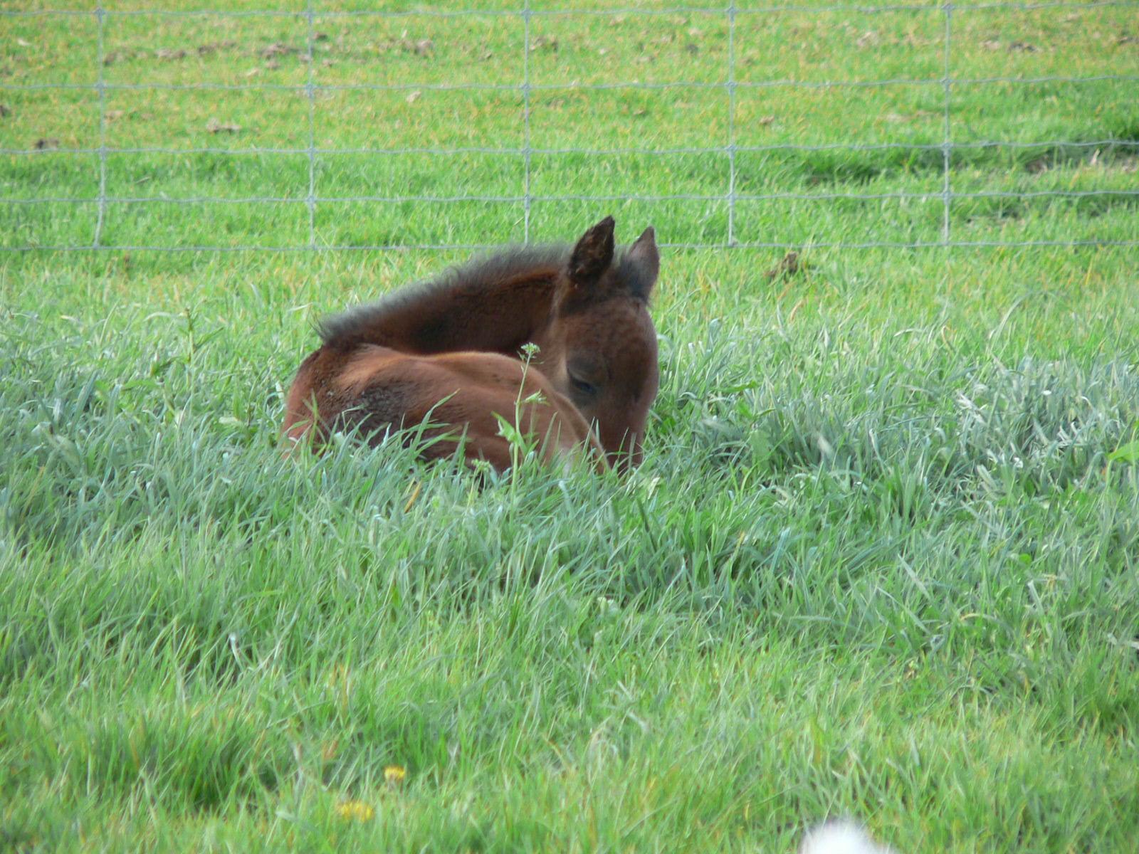 Tyr as a foal
