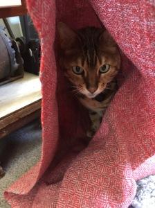Diamond twill cloth and cat