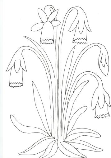 Daffodil02012019_0000